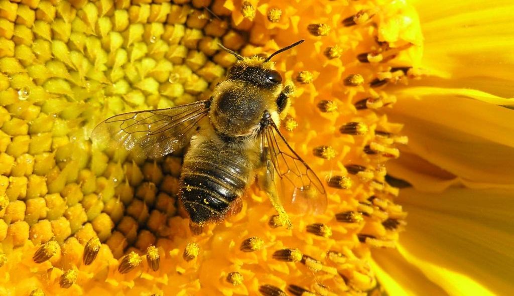 бізнес-ідея розведення бджіл