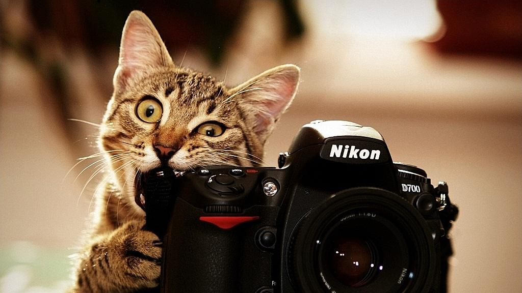 Частный фотограф - идея малого бизнеса