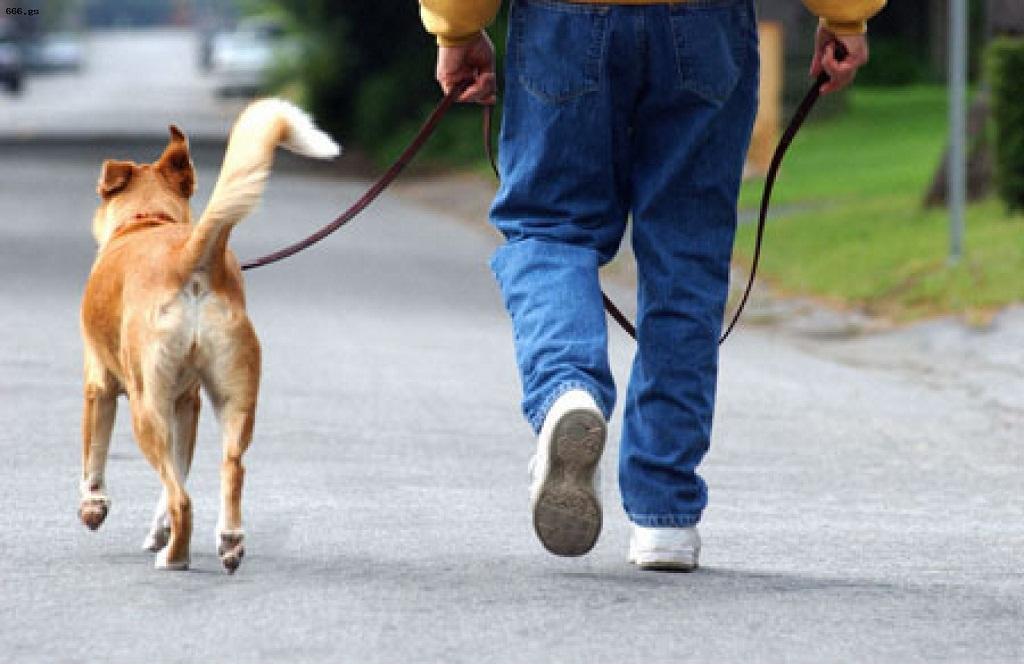 бизнес-идея на выгуле собак