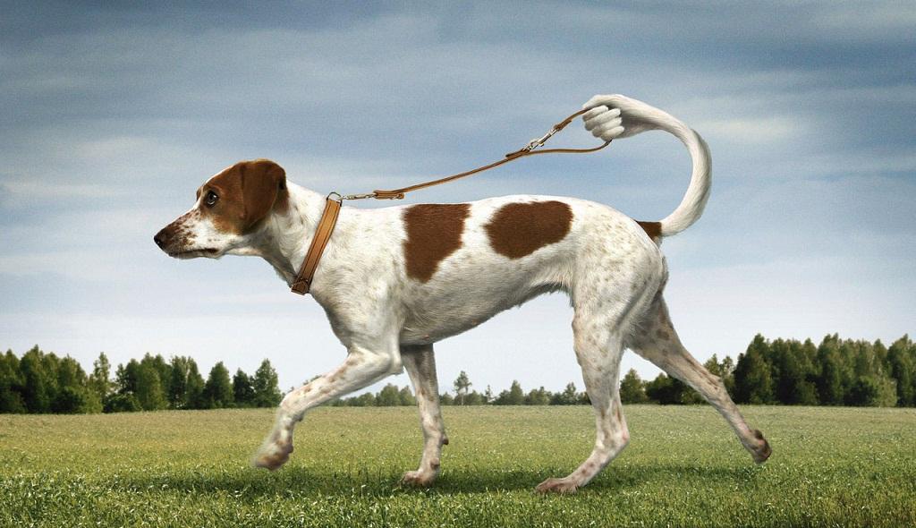 Вигул собак прекрасна бізнес-ідея
