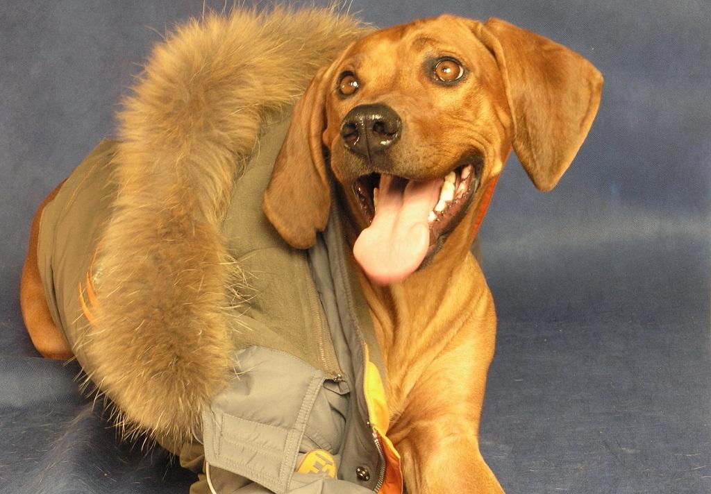 куртки для тварин