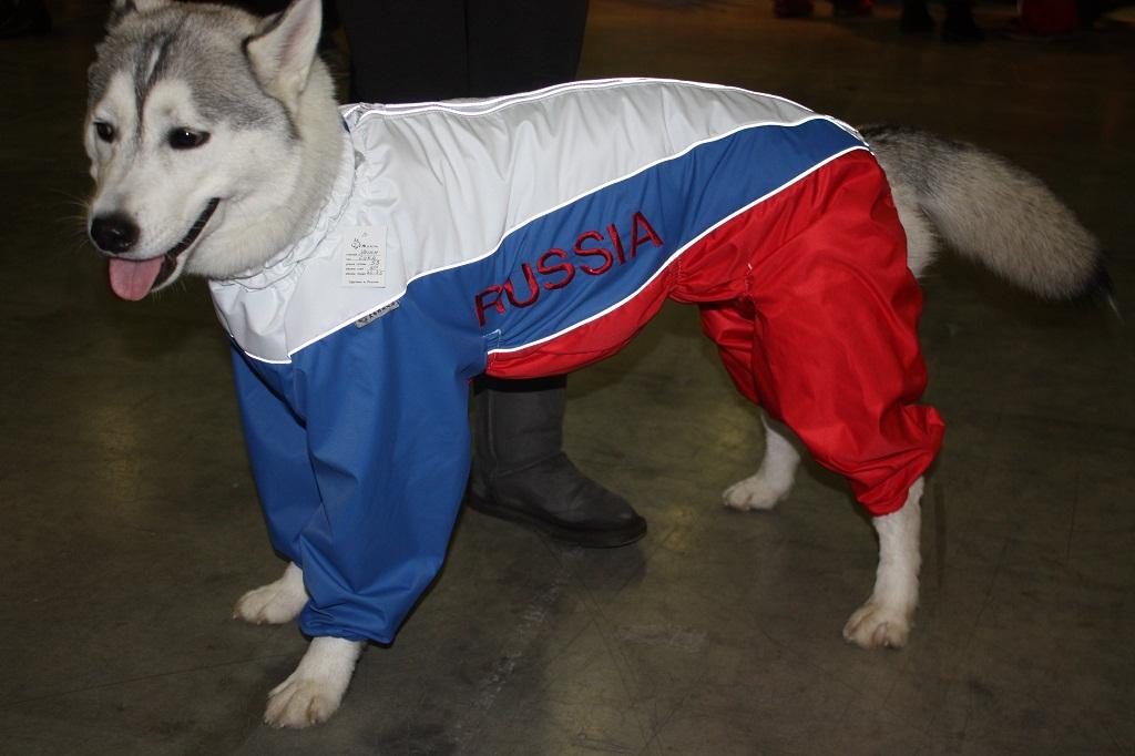 Виробництво одягу для тварин з трикотажу