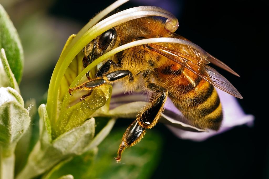 Бизнес-идея занятия пчеловодством