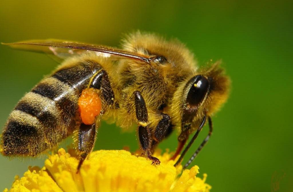 С чего начать бизнес на разведении пчел