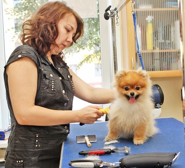 Как организовать салон красоты для животных