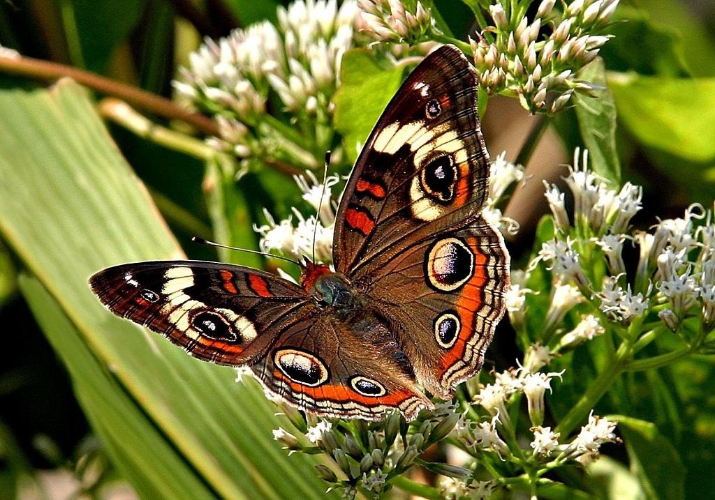 Куда девать нераспроданных бабочек