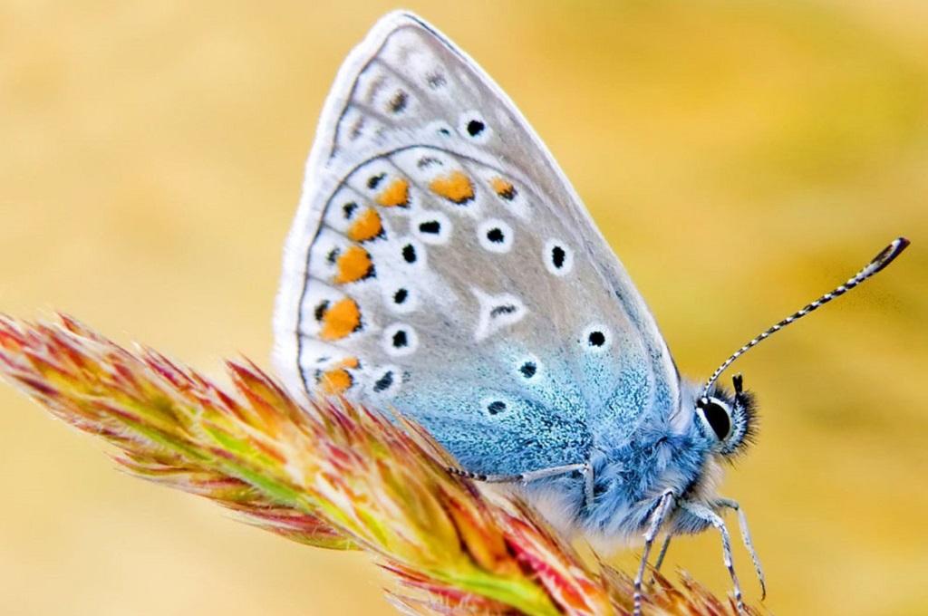 Процесс разведения бабочек