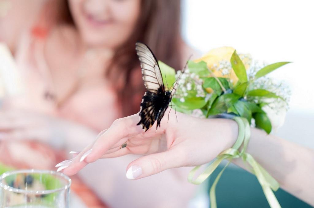 Салют з живих метеликів