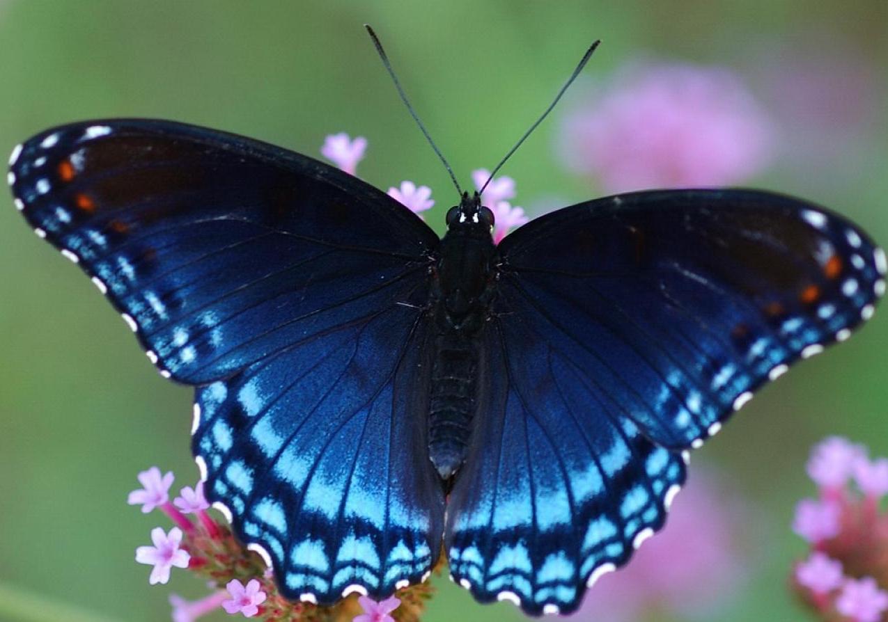 бизнес-идея по разведению бабочек