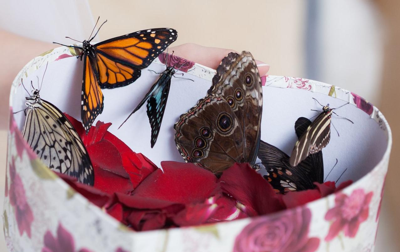 бизнес по продаже бабочек