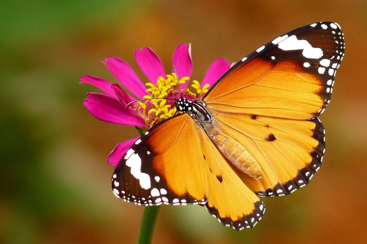 клиентура бизнеса по разведению бабочек