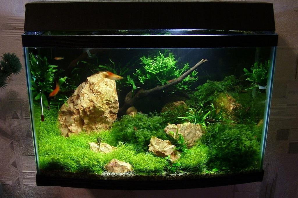 Бизнес-идея разведения и продажи аквариумных рыб, рассады, растений