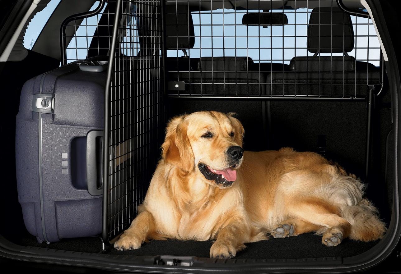 бизнес-идея такси для животных