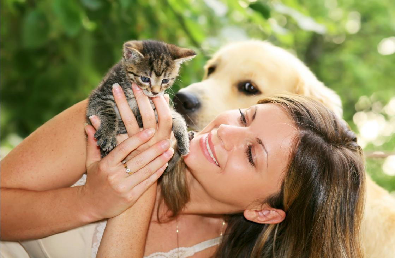 бизнес-идея сиделка для животных