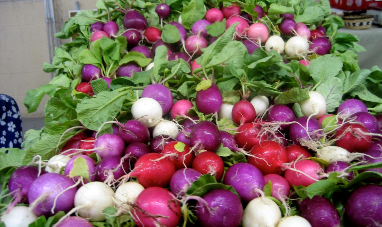 как выбрать сорт выращиваемого редиса