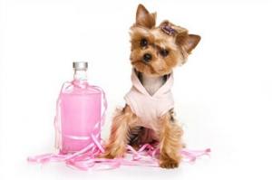 Косметика для тварин бізнес