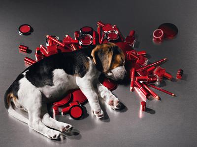 Косметика для тварин ідея для бізнесу