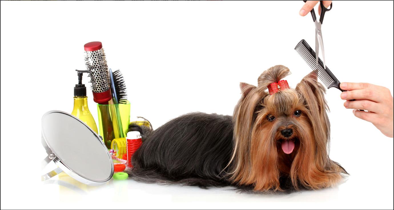 бизнес-идея изготовления косметики для животных