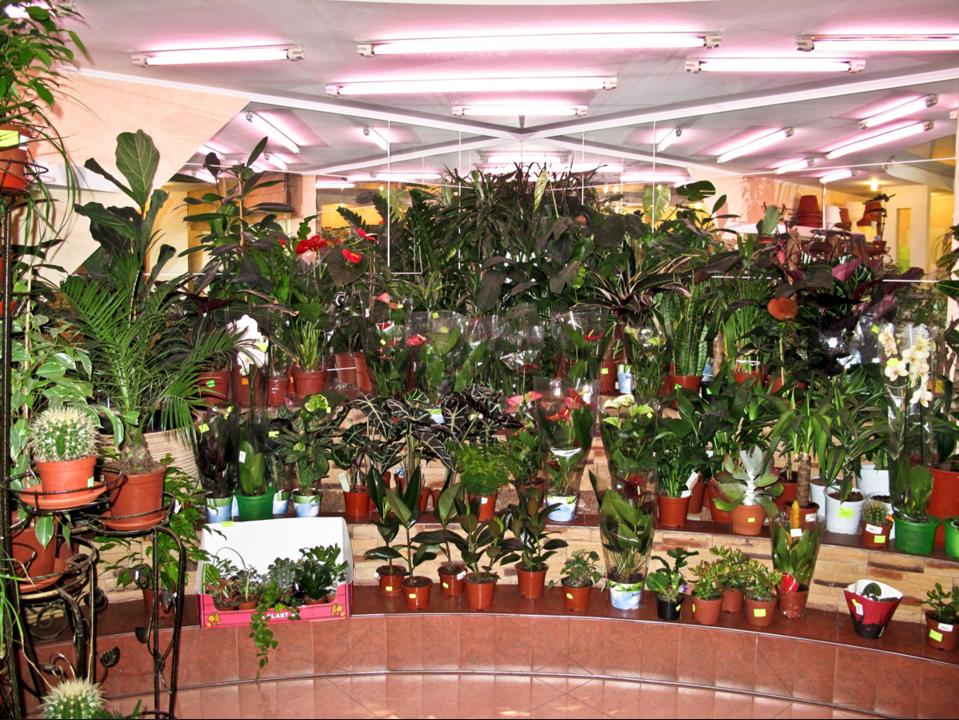 бізнес-ідея на вирощуванні кімнатних рослин