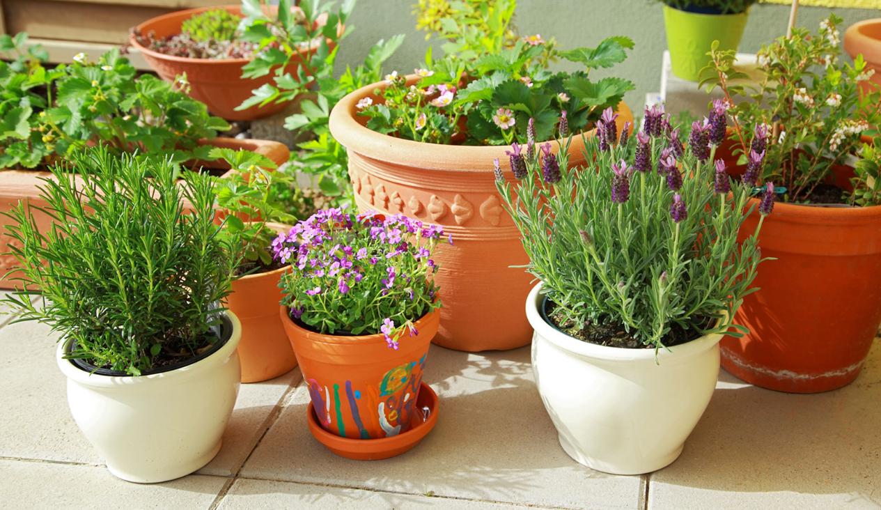 бизнес-идея на выращивании комнатных растений