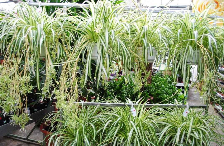 як почати бізнес на вирощуванні рослин