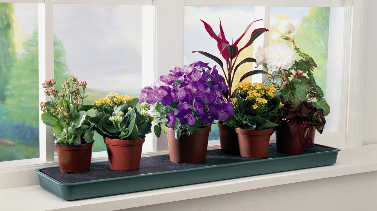 как организовать бизнес на выращивании комнатных растений