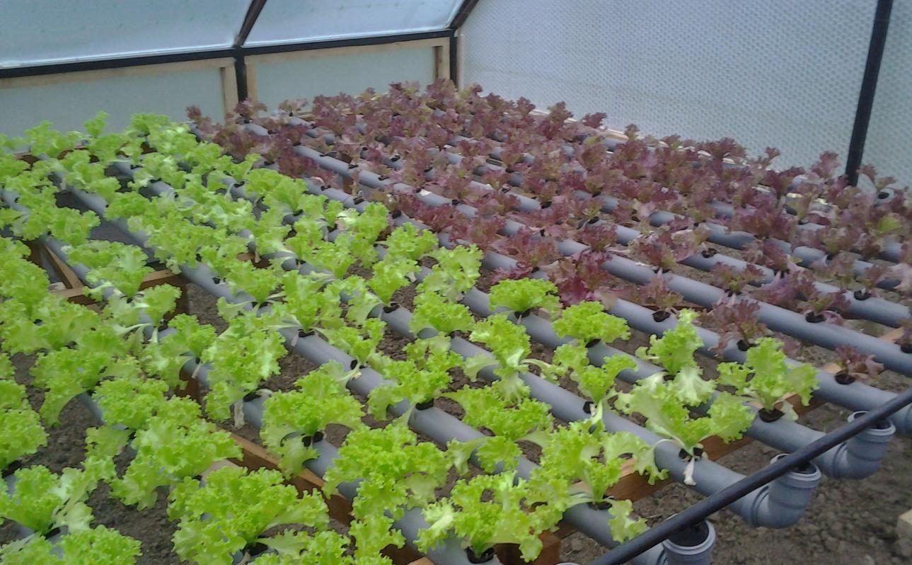 Сделать для выращивание зелени