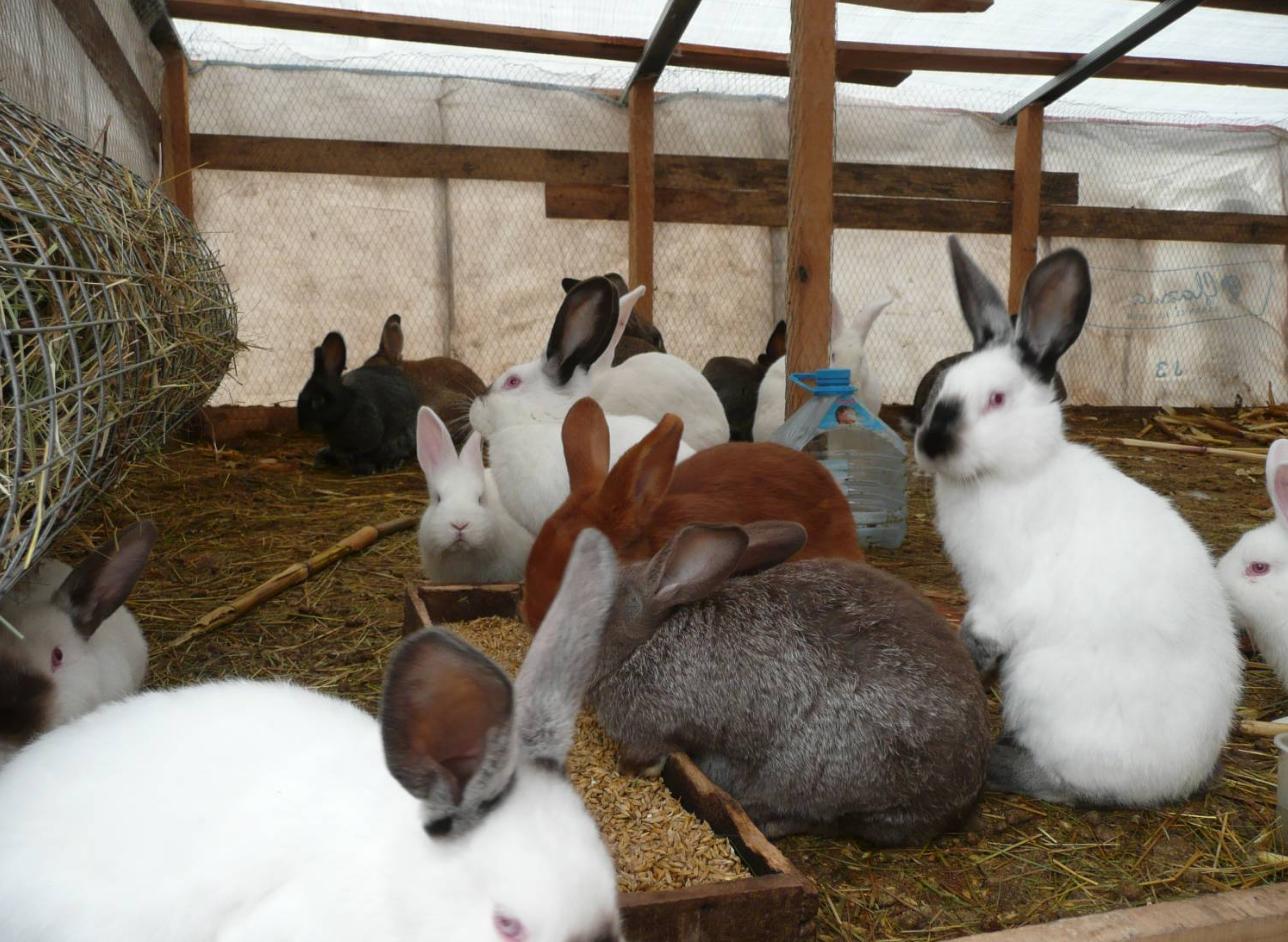 бизнес-идея разведения кроликов