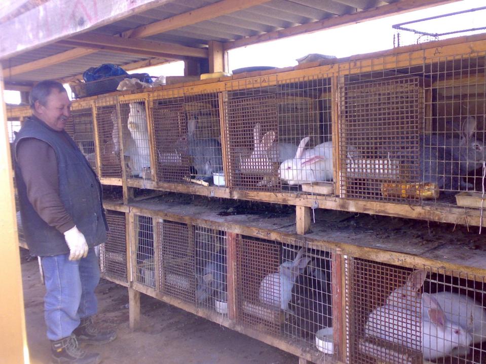 бізнес-ідея розведення кроликів