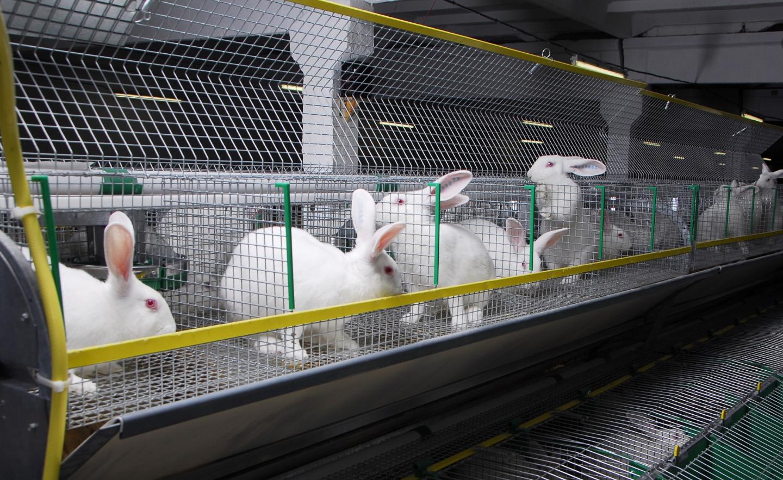как организовать бизнес на разведении кроликов