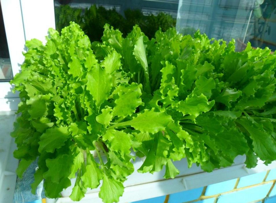 как организовать бизнес по выращиванию зелени