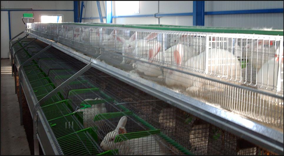 Бизнес выращивание кроликов 86