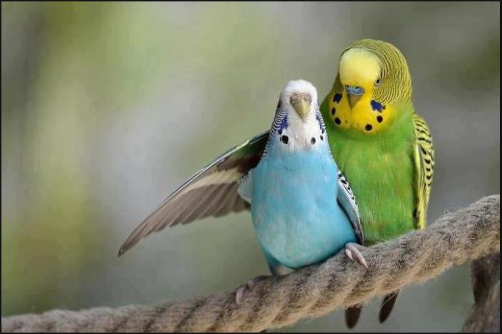 бизнес-идея по разведению попугаев