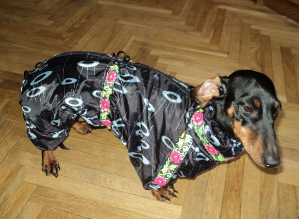 як організувати бізнес з пошиття одягу для собак