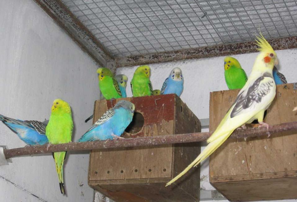 як організувати бізнес з розведення папуг