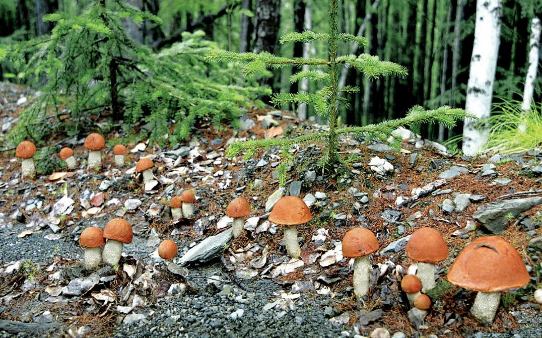 Как организовать бизнес по сбору и продаже лесных грибов