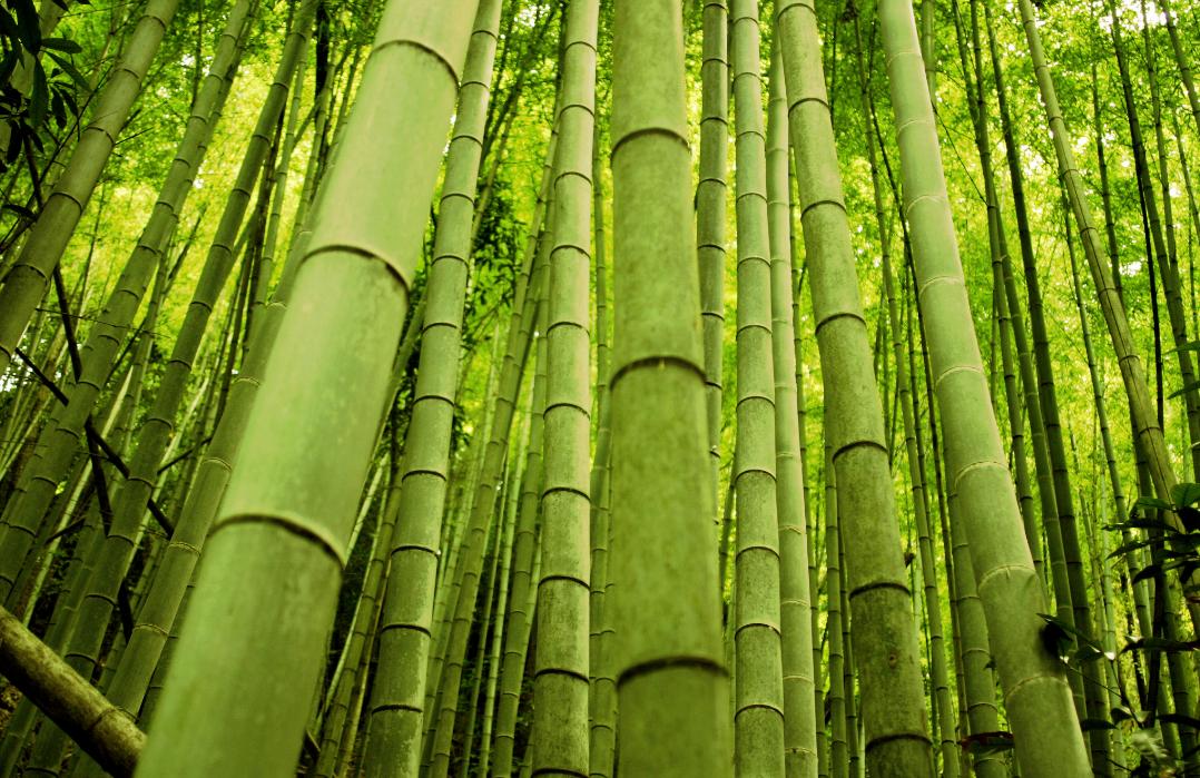Бизнес-идея изготовления бамбуковых удилищ