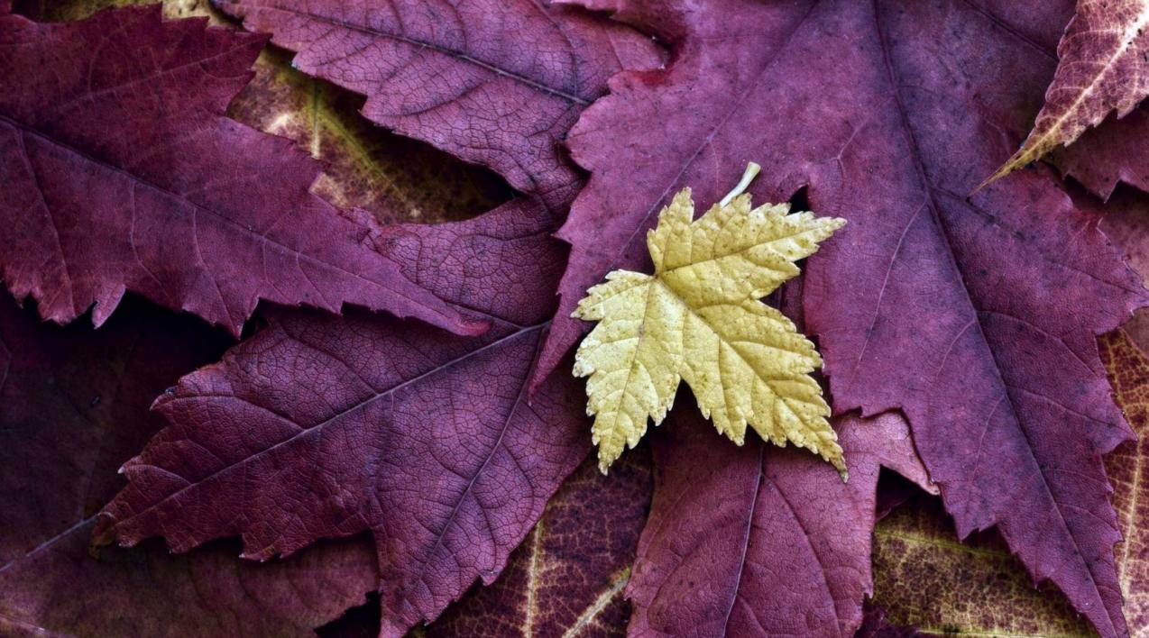 бізнес по створенню картин з осіннього листя