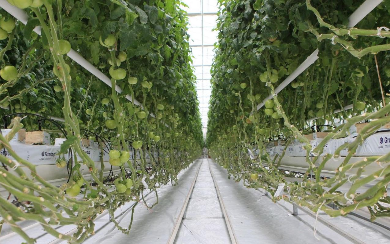 Как организовать бизнес по открытию тепличного хозяйства