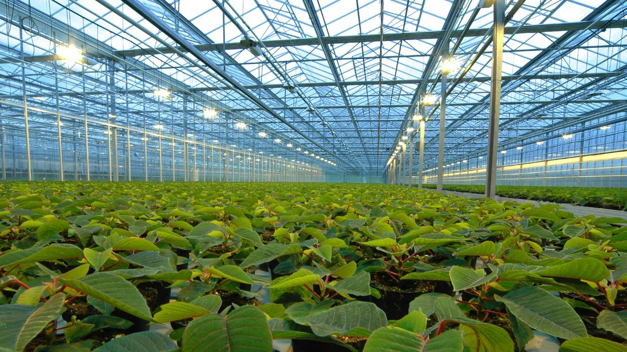 як організувати бізнес з відкриття тепличного господарства