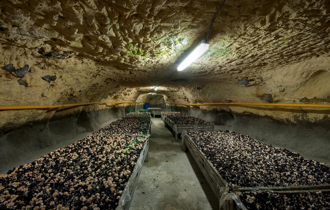 как организовать бизнес по выращиванию шампиньонов