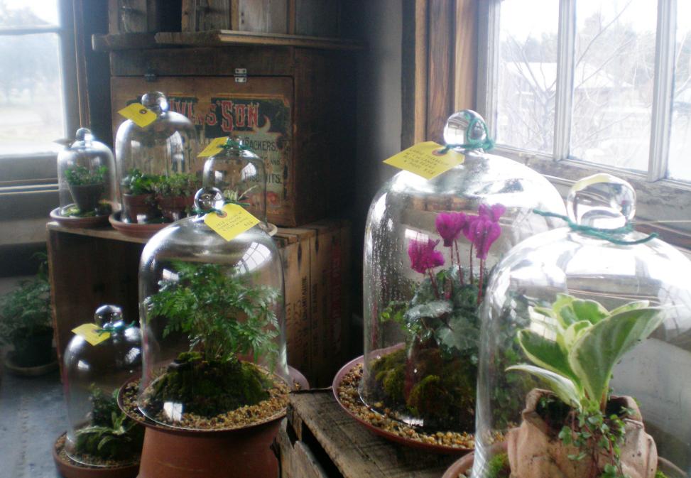 Бизнес-идея изготовления и продажи флорариумов