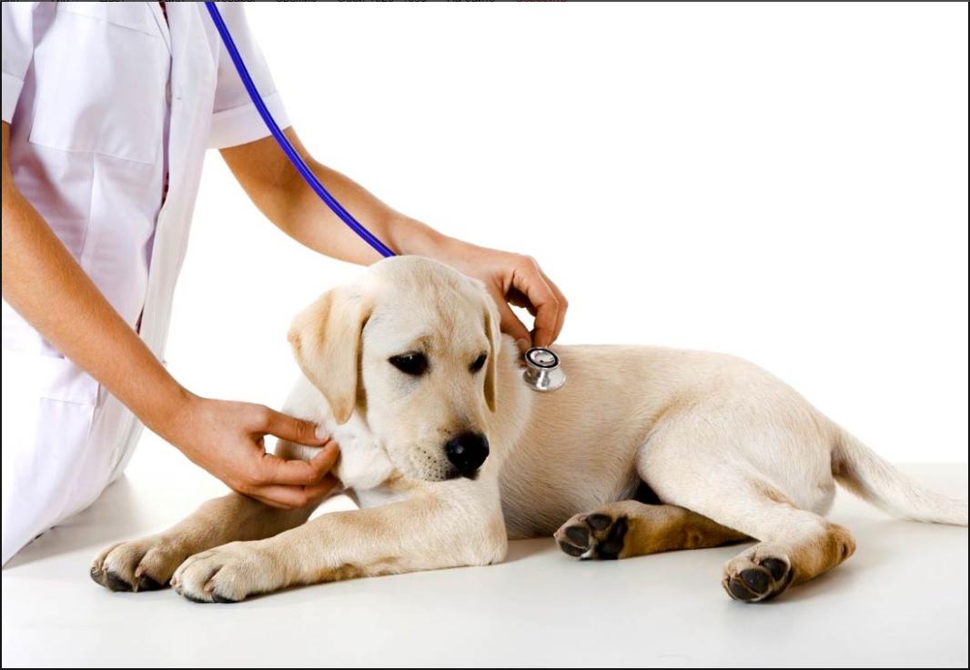 Бизнес-идея открытия ветеринарной клиники