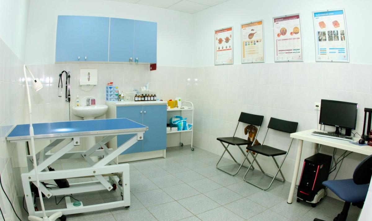 Как организовать бизнес по открытию ветеринарной клиники