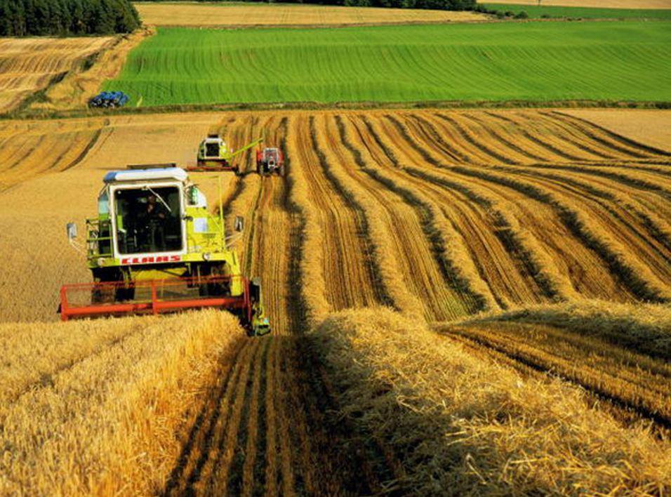 Плюсы и минусы фермерства