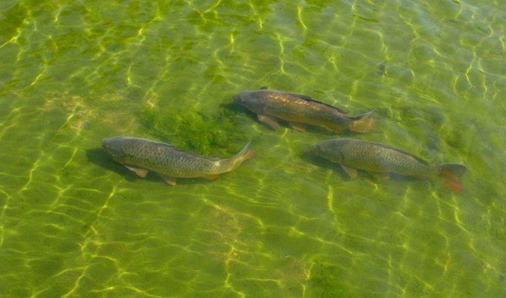 Бизнес-идея разведения рыбы