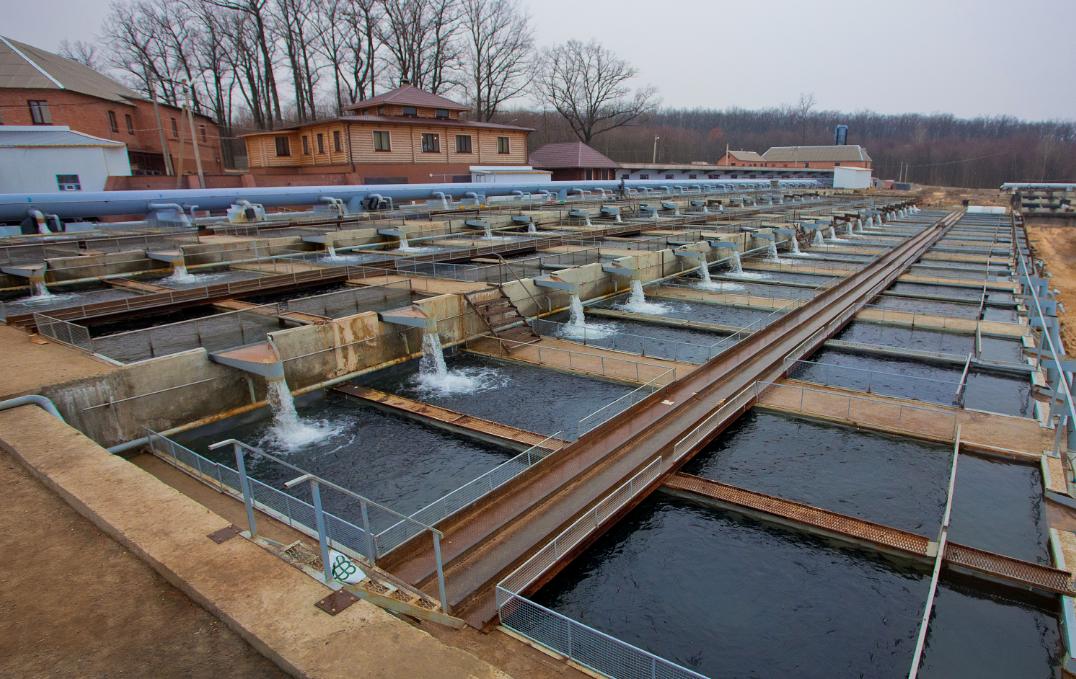 бізнес по вирощуванню риби