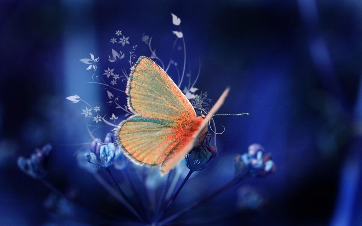 Бизнес-идея по разведению бабочек на дому
