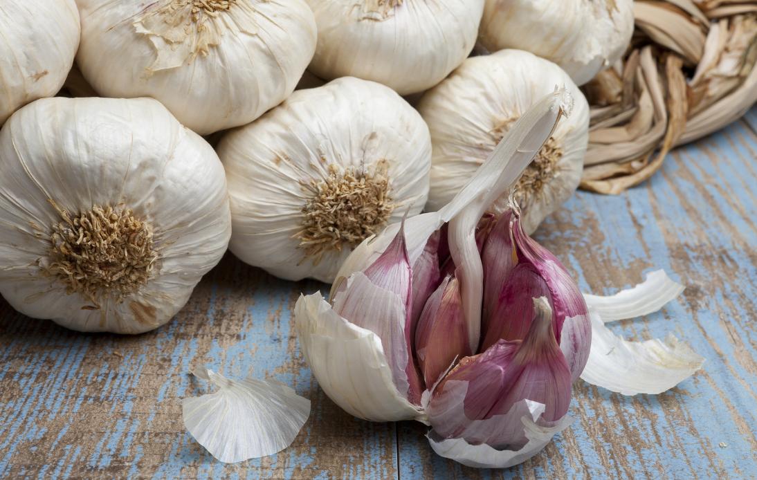 Как организовать бизнес на выращивании чеснока