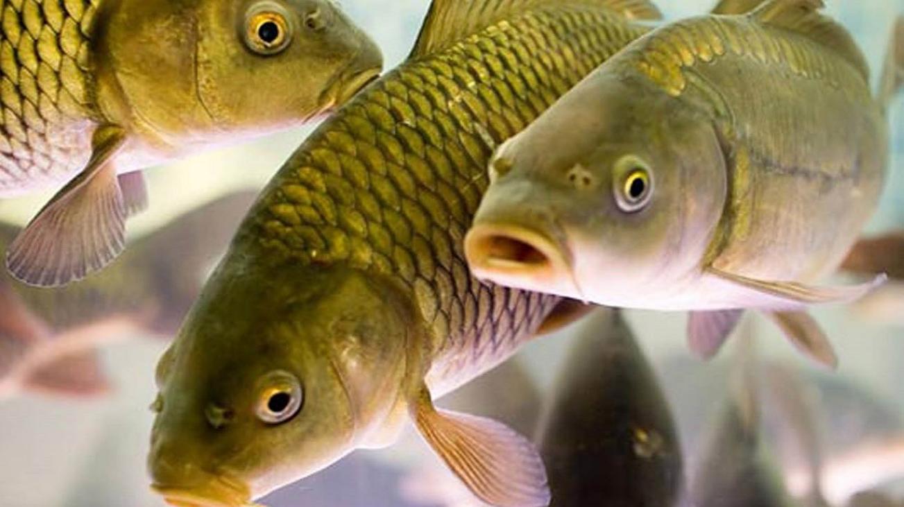 Бизнес-идея выращивания и отлова рыбы